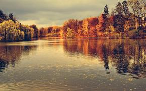 秋, 湖, 木, 風景