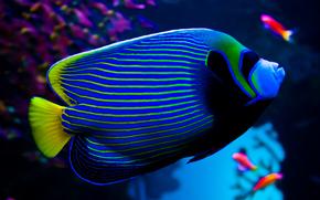 аквариум, рыба, фон