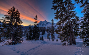 sunrise, mt. Baker, alberi, Washington, USA
