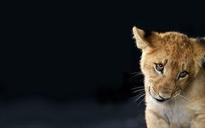 Lionet, tło, widok