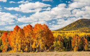 fogliame, foresta, giallo, autunno, alberi
