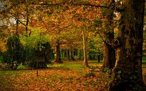 парк, осень, Испания, Madrid, Campo, листья, ствол, деревья, природа