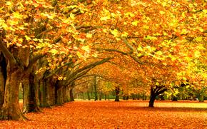 Pause de l'automne, couleur de chute, arbres, laisse
