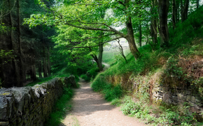 road, Stone Wall, trees, landscape