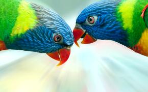 Pappagalli, uccelli, colore