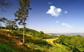 イングランド, イギリス, ヒルズ, 木, 風景