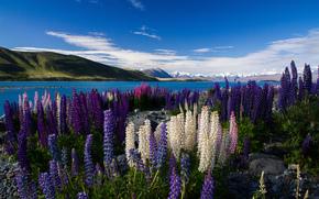 山, 湖, 花卉, 羽扇, 缋