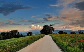 道路, 场, 树, 马切拉塔, 马尔凯, 意大利