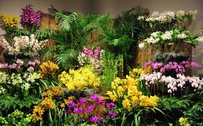 serra, Fiori, piante