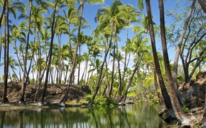 绿洲, 卡哈拉, 夏威夷