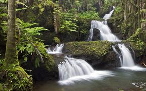 丛林瀑布, 南希洛, 夏威夷, 性质