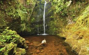 卡哈拉森林自然保护区, 大岛, 夏威夷, 瀑布