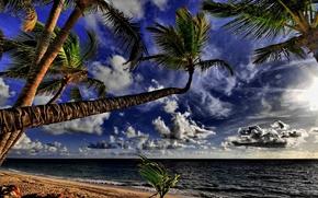 ocean, Palms, coast, beach, tropics