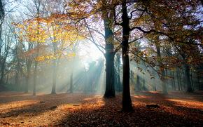 autunno, foresta, chiaro, alberi