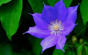 花, 葉, 背景
