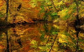 秋, 池塘, 树, 景观