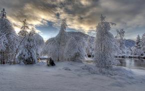 collie barbado, collie barbado, Tveitadalen, Kvinnherad kommune, Noruega