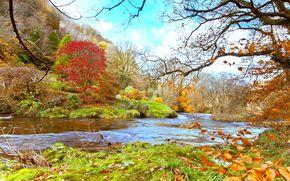 秋, 河, 景观