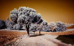 arbre, arables, forêt, ferme, Italie