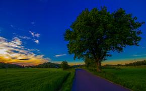 树, 场, 道路, 景观