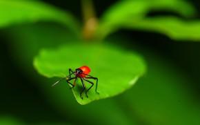 マクロ, シート, 昆虫