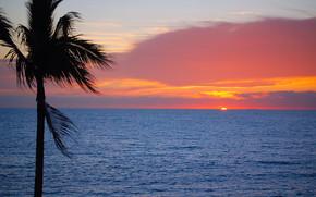 закат, море, пальма, пейзаж