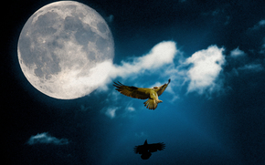 Moon Dance, osprey, crow, eagle, raven