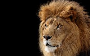 león, bestia, hishnik