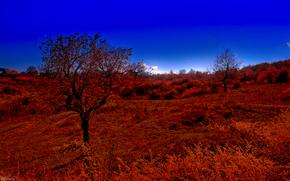 秋, 山, 树, 景观