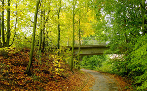 秋, 公园, 道路, 桥, 树, 景观