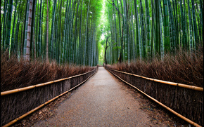 forest, bamboo, road, fence