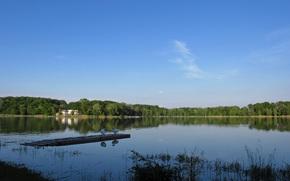 lago, foresta, Cigni, riflessione, acqua, paesaggio