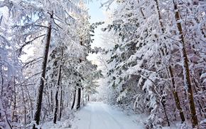 зима, дорога, деревья в снегу, пейзаж