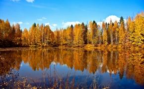 lago, foresta, autunno, alberi, paesaggio