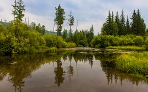 秋, 湖, 景观