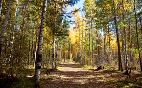 осень, лес, дорога, пейзаж