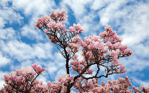 sky, tree, BRANCH, Flowers, nature