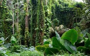 夏威夷, 热带植物园, 花园