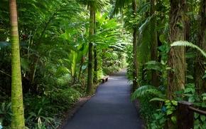 夏威夷, 热带植物园, 花园, 性质