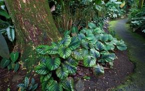 Hawaii, Tropical Botanical Garden, jardin, nature