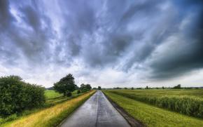 道路, 场, 树, 景观