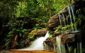森林, 树, 瀑布, 岩石, 性质