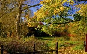 autumn, trees, fence, road, landscape
