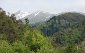 Mountains, forest, nature, Tau, Alma-Ata