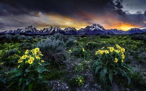 Grand Teton National Park, Wyoming, USA, sunset, Mountains, field, Flowers, landscape