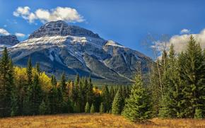 Banff National Park, Alberta, Canada, Canadian Rockies, Bow Valley, Банф, Альберта, Канада, Скалистые горы, долина Боу, лес, деревья, горы