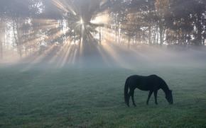 horse, sunrise, meadow, trees