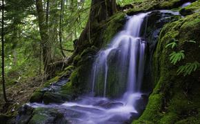 森林, 瀑布, 性质
