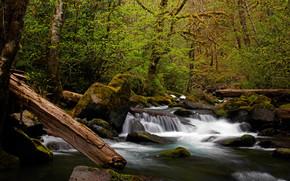 瀑布, 森林, 石头, 树, 苔, 性质