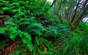 лес, деревья, растения, природа